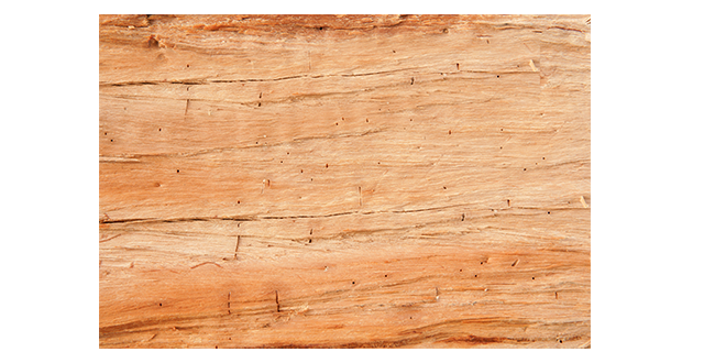 Wood-texure-020