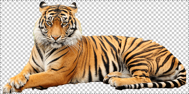 Tiger Images Png