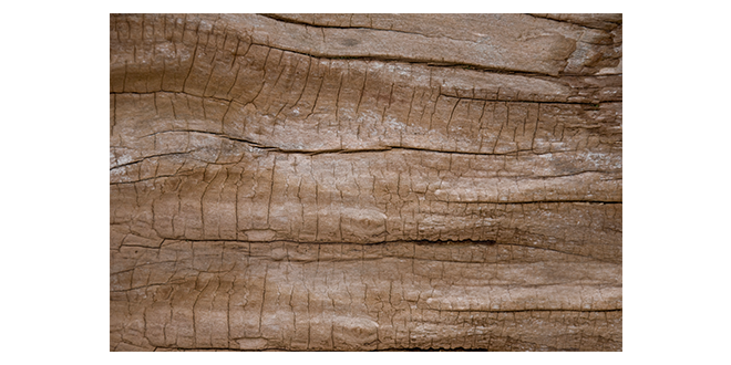 Wood texure 002