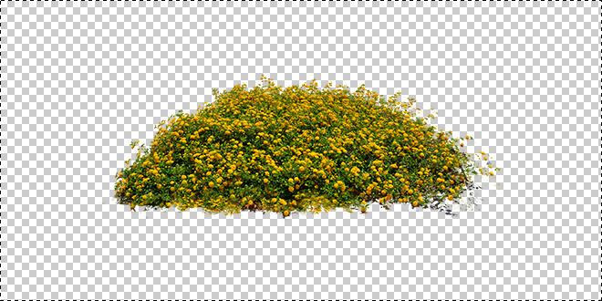 yellow_flower_bed_stock-0104 png