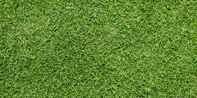 Grass-019