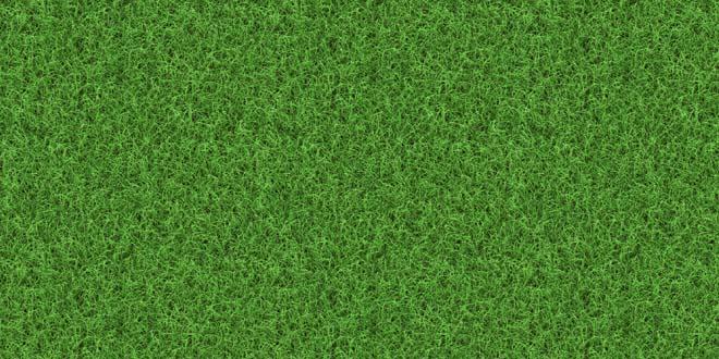 Grass-020