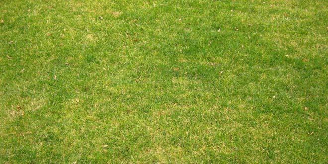 Grass-021
