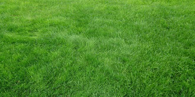 Grass-025