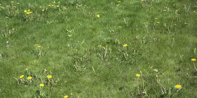 Grass-029