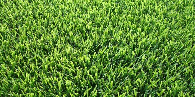 Grass-030