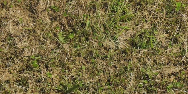 Grass-031