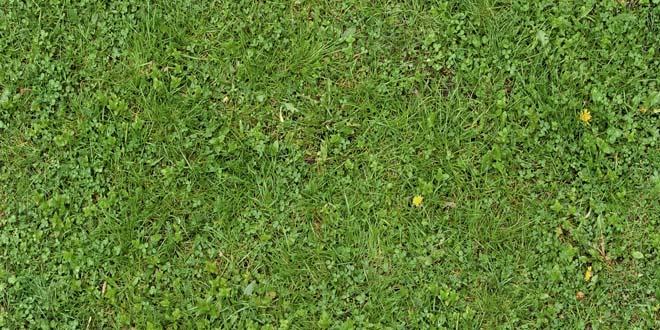 Grass-036