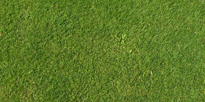 Grass-038