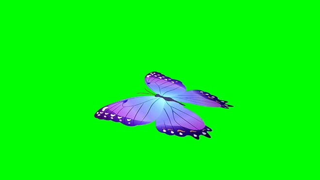 butterfly HD looping free Downloadh