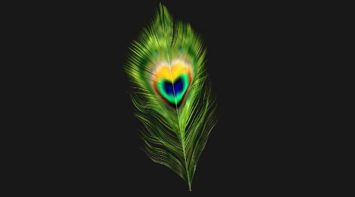Feather 3D Model FREE DOWNLOAD