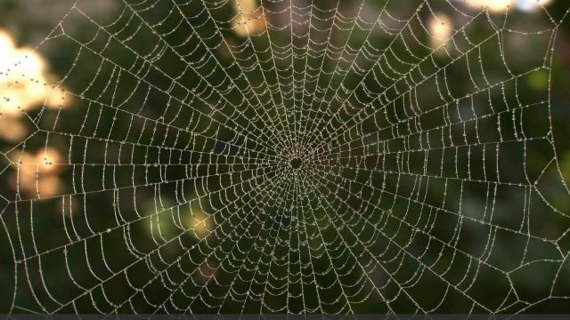 Spiderweb 1.2 – Free plugin for cinema 4d