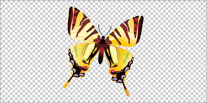 Butterfly 178