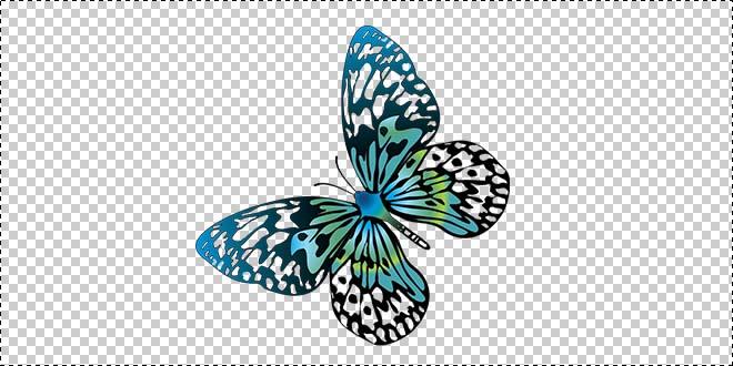 Butterfly 179