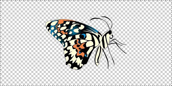 Butterfly 180