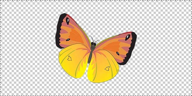 Butterfly 181