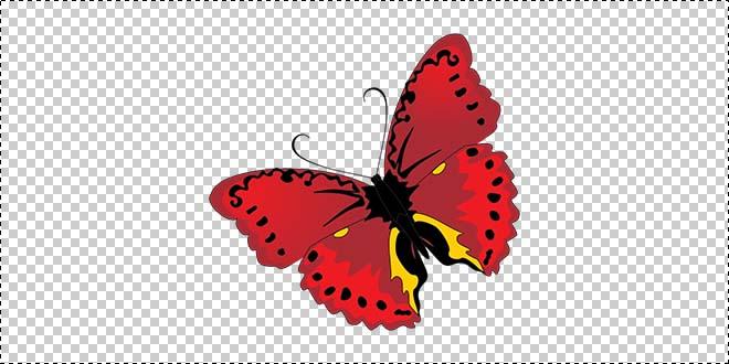 Butterfly 183