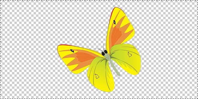 Butterfly 185