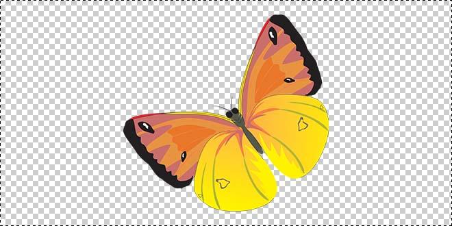 Butterfly 186