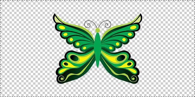 Butterfly 190