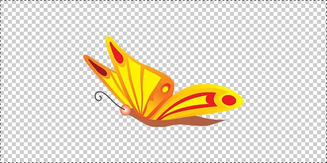 Butterfly 193
