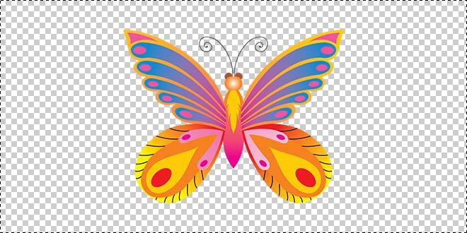 Butterfly 195